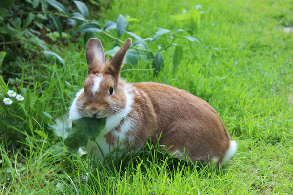 How will rabbits affect you this spring?