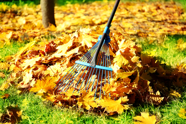 Rake sticking into a pile of bright orange leaves in autumn