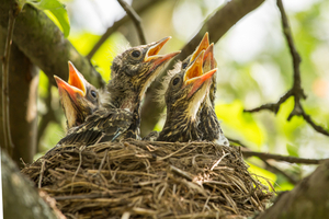how can I avoid hurting the nest of its occupants?