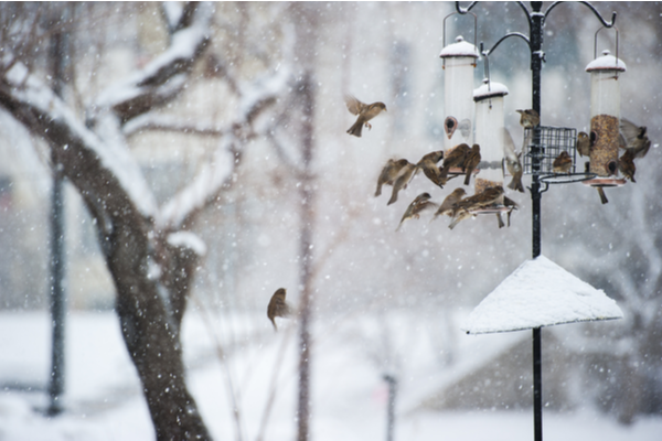 Flock of birds flying around a bird feeder in winter