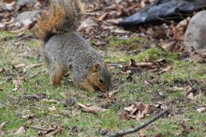 "Squirrels use ""scatter hoarding"" to organize the food they collect"