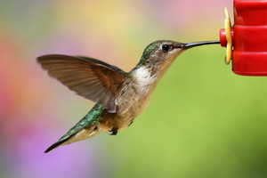 How can I attract hummingbirds?