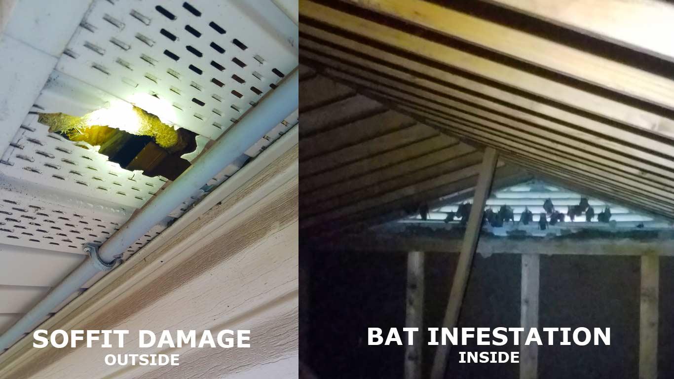 Bat Identification Wildlife Services