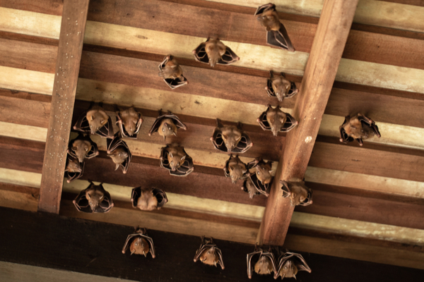 how do bats get into my house?