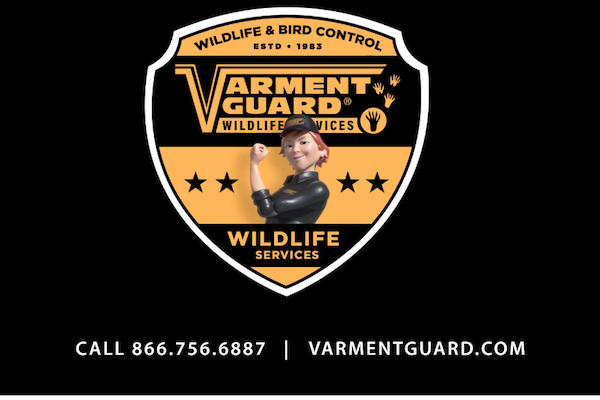 Varment Guard Wildlife Services video