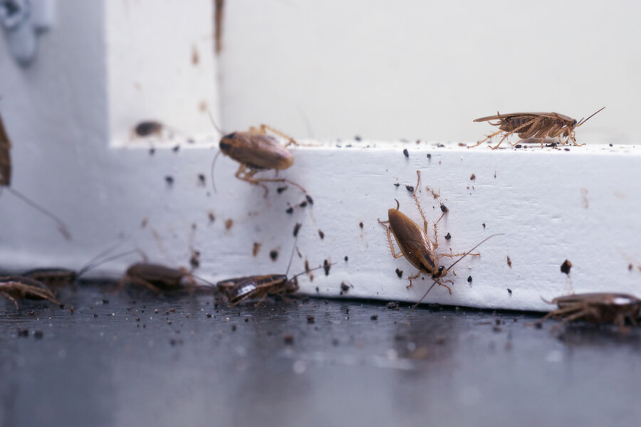 cockroach infestations during winter