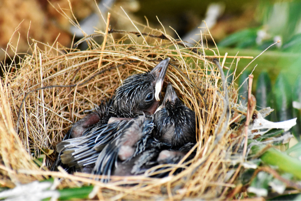 How Do Birds Choose Where to Nest?