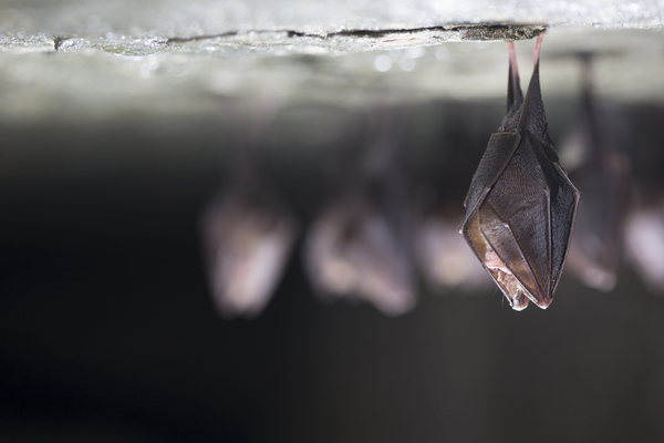 bats in winter