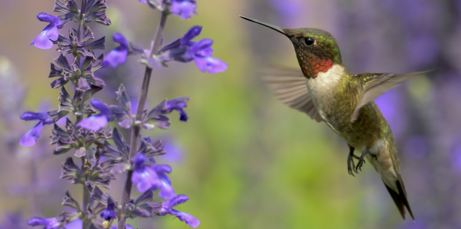hummingbird by flowers